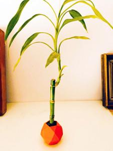 luckybamboo